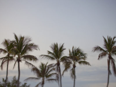 Florida Keys, Palm Trees, Destination Wedding Photographers, Aric + Casey Photography
