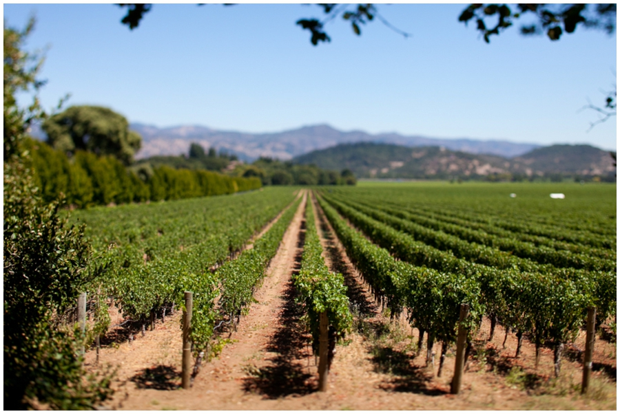 Napa Valley Wine Country